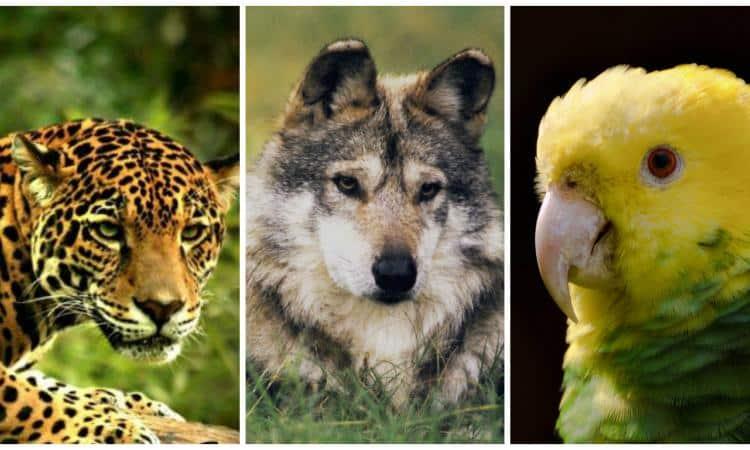 Los 10 animales que podrían desaparecer en México