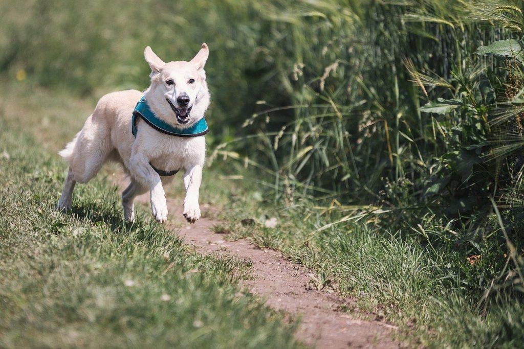 Todo lo que debes saber para que las garrapatas no molesten a tu perro